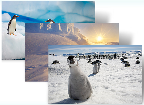 Download: Windows 7 theme to get feel of Antarctica
