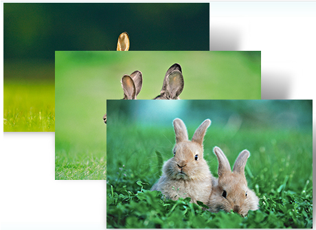 Download: Funny Windows 7 theme of Rabbits